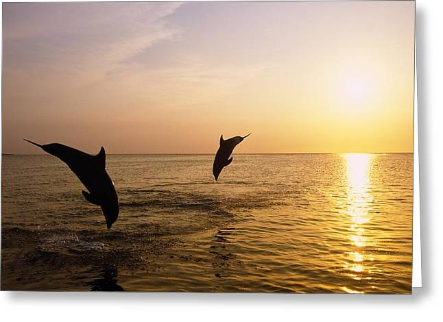 Synchronicity Greeting Cards - Silhouette Of Bottlenose Dolphins Greeting Card by Natural Selection Craig Tuttle