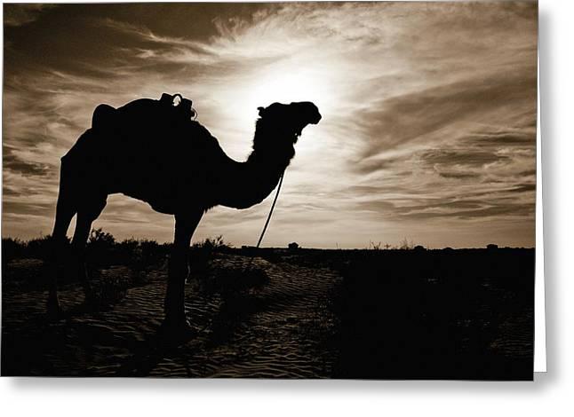 Desert Greeting Cards - Silhouetted Camel, Sahara Desert, Douz Greeting Card by David DuChemin