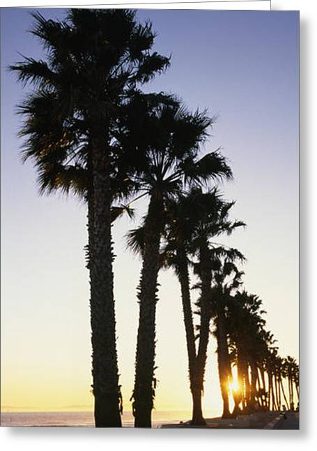 Ventura California Greeting Cards - Silhouetted Palm Trees Along Surfers Greeting Card by Rich Reid