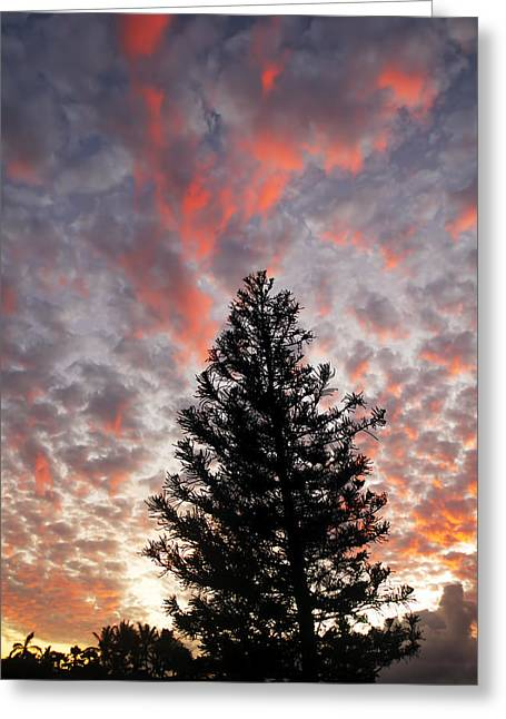 Amazing Sunset Greeting Cards - Silhouetted Pine and Sunset II Greeting Card by Ron Dahlquist