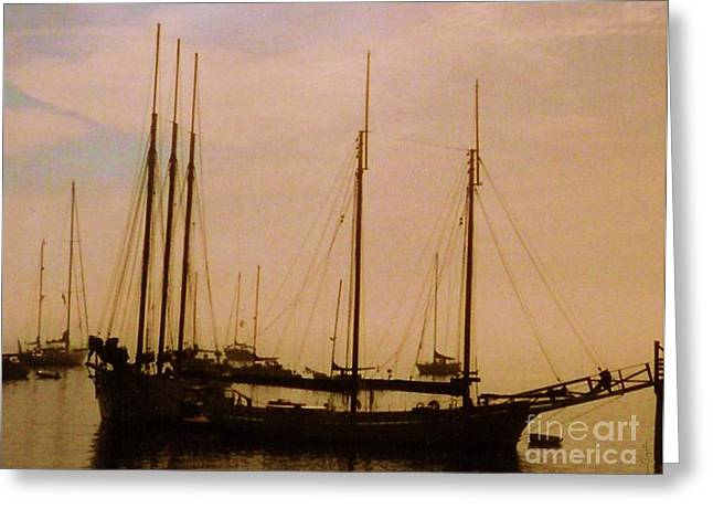 Boats In Harbor Greeting Cards - Silhouetted Sailboats Greeting Card by Desiree Paquette