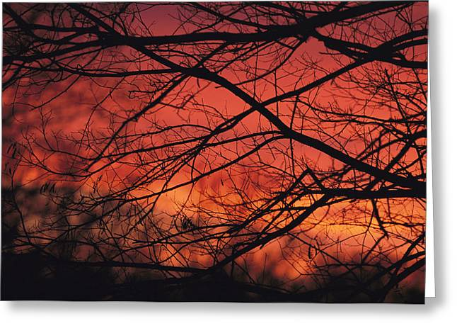 Park Scene Greeting Cards - Silhouetted Tree Branches Against A Red Greeting Card by Michael Fay