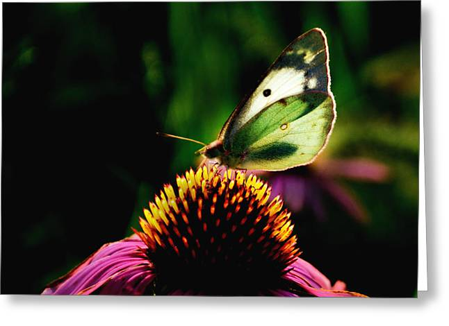 Glassy Wing Greeting Cards - Silky Wings Greeting Card by Lyle  Huisken