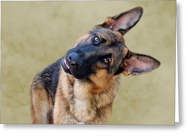 Indiana German Shepherds Greeting Cards - Silly Boy Greeting Card by Sandy Keeton