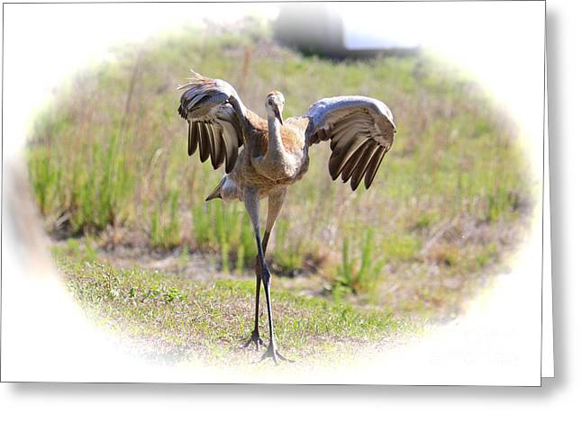 Sandhill Crane Chick Greeting Cards - Silly Sandhill Crane Chick Greeting Card by Carol Groenen