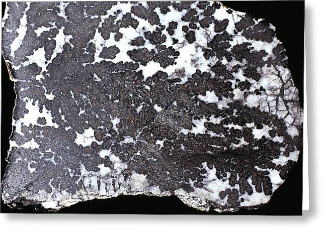 Silver Ore Greeting Cards - Silver Deposits In Quartzite Greeting Card by Dirk Wiersma