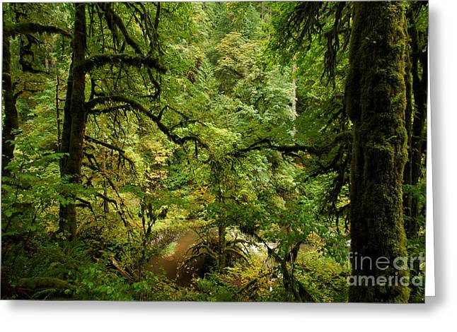 Silver Falls Greeting Cards - Silver Falls Rainforest Greeting Card by Adam Jewell