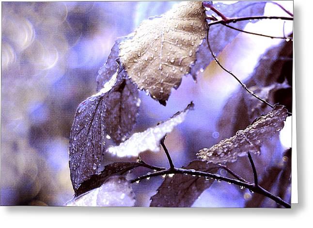 Silver Rain. The Garden Of Dreams Greeting Card by Jenny Rainbow