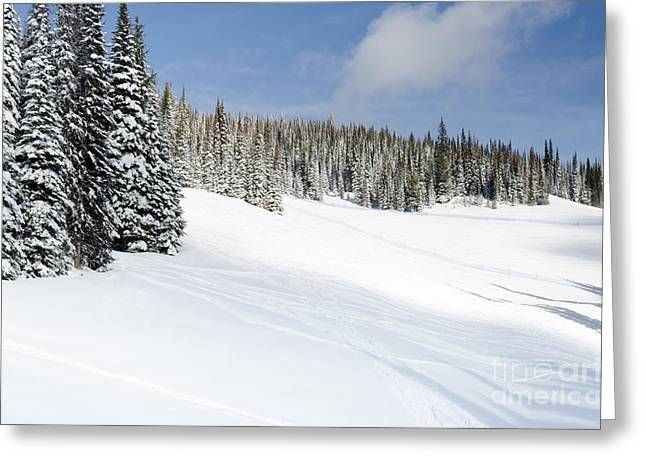 Silverstar Meadow Snow Covered Alpine Meadow Silver Star Greeting Card by Andy Smy