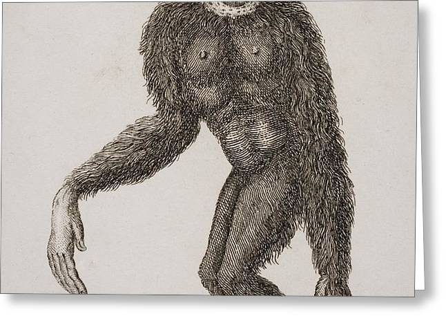 Simia Lar, Great Gibbon. Engraved By Greeting Card by Ken Welsh