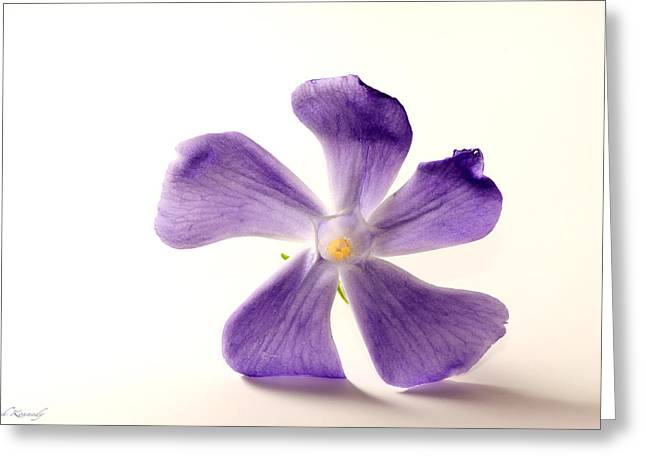 Flower Still Life Greeting Cards - Simple Beauty Greeting Card by Leah Kennedy