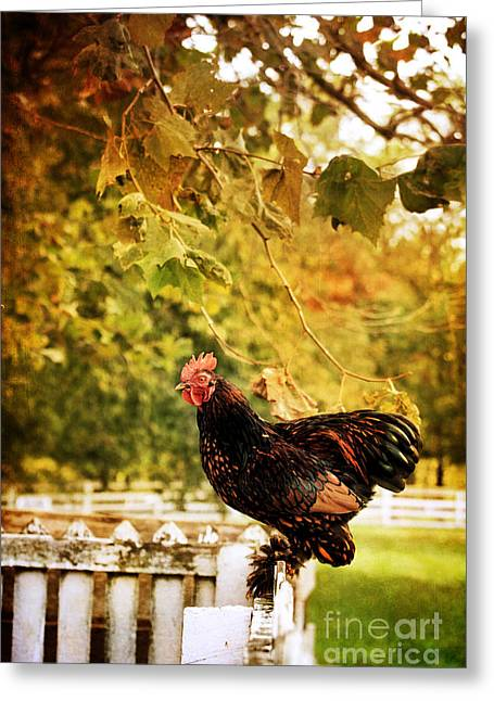 Fluffy Chickens Greeting Cards - Simple Mornings Greeting Card by Stephanie Frey