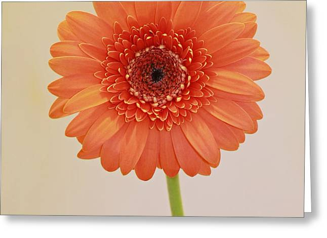 Simple Pleasures Greeting Card by Inspired Nature Photography By Shelley Myke