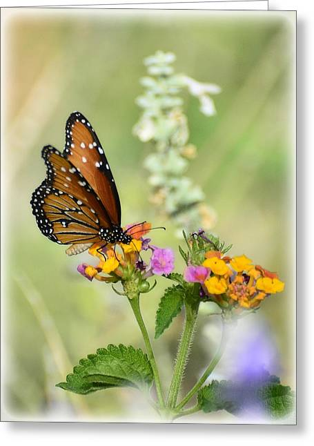 Queen Butterfly Greeting Cards - Simple Pleasures  Greeting Card by Saija  Lehtonen