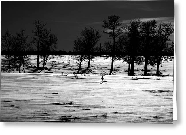 Simple Trees Greeting Card by Jerry Cordeiro