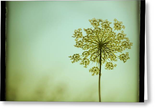 Botanicals Greeting Cards - Simplexity Greeting Card by Irene Suchocki