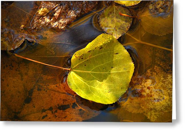 Forest Floor Greeting Cards - Simplicity Greeting Card by Heather Hinam