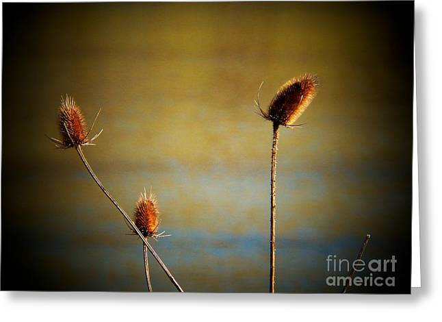 Cat Tail Greeting Cards - Simplicity Greeting Card by Joyce Kimble Smith
