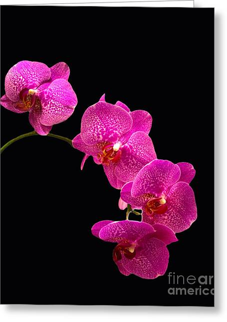 Flower Boxes Pyrography Greeting Cards - Simply Beautiful Purple Orchids Greeting Card by Michael Waters