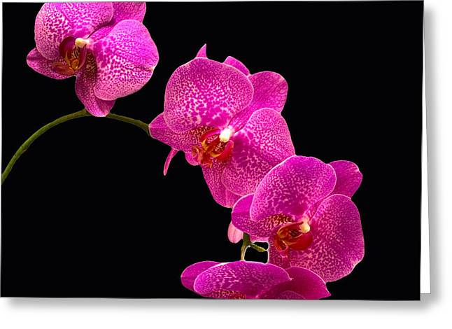 Simply Beautiful Purple Orchids Greeting Card by Michael Waters