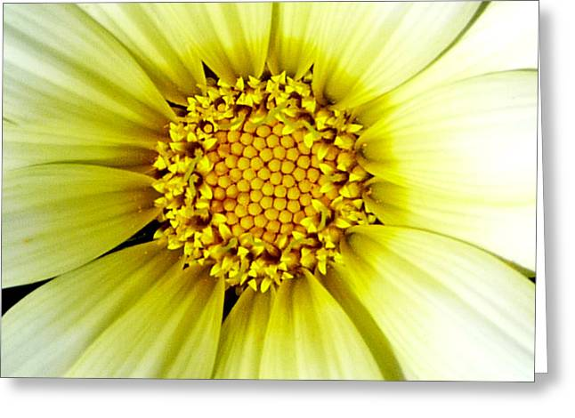 Simply Daisy Greeting Card by JoAnn SkyWatcher