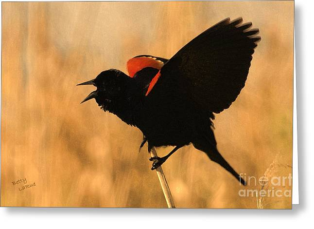 Blackbird Greeting Cards - Singing at Sunset Greeting Card by Betty LaRue
