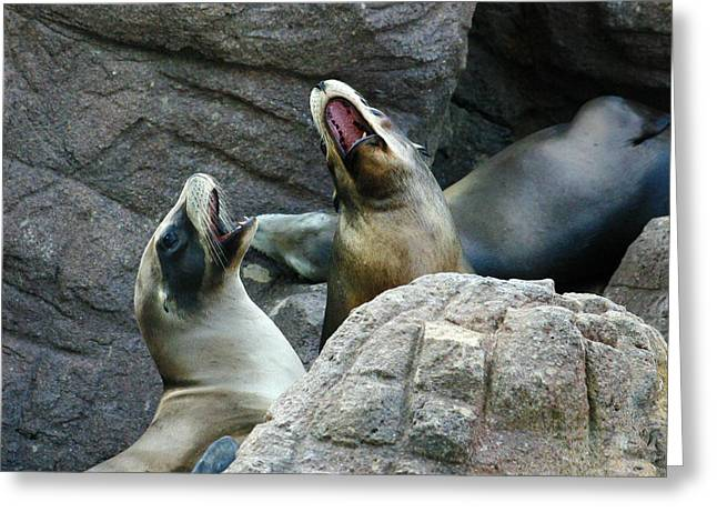 Sea Lions Greeting Cards - Singing Sea Lions Greeting Card by Anthony Jones