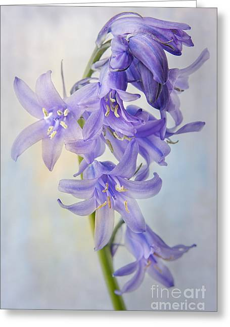 Endymion Greeting Cards - Single Bluebell Greeting Card by Ann Garrett