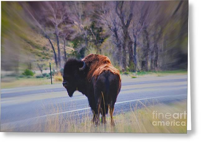 Single Buffalo in Yellowstone NP Greeting Card by Susanne Van Hulst