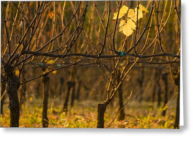 Pinot Noir Greeting Cards - Single leaf Greeting Card by Jean Noren