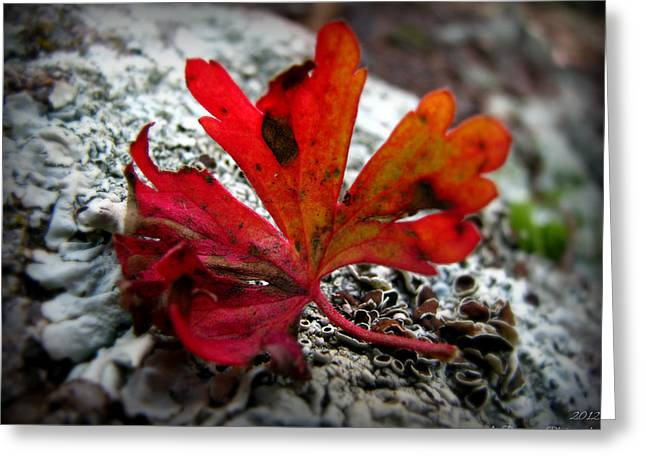 Prescott Greeting Cards - Single Red Leaf  Greeting Card by Aaron Burrows