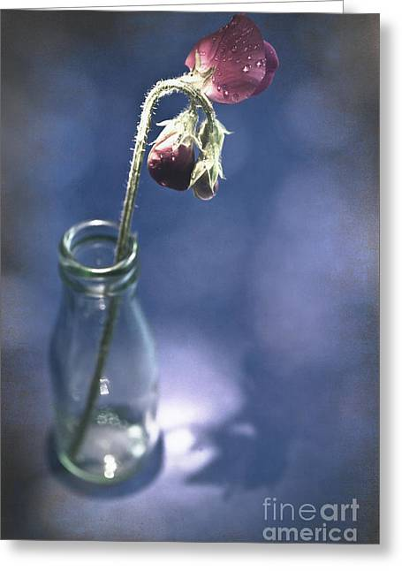 Bottled Water Greeting Cards - Single Sweetpea Greeting Card by Jan Bickerton