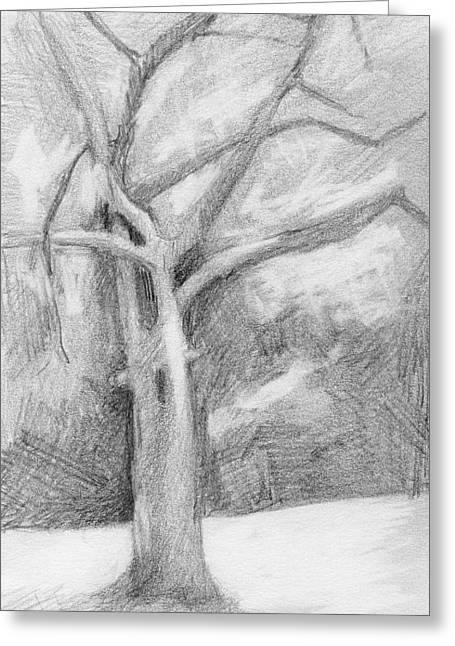 Bare Trees Drawings Greeting Cards - Single Tree Greeting Card by Irma   Ostroff