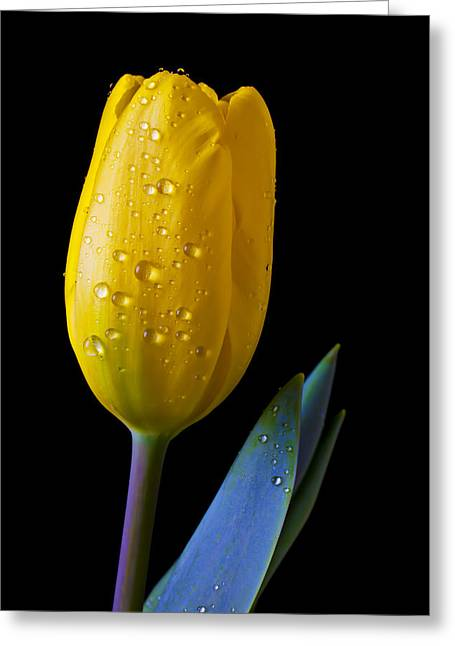 Single Photographs Greeting Cards - Single Yellow Tulip Greeting Card by Garry Gay