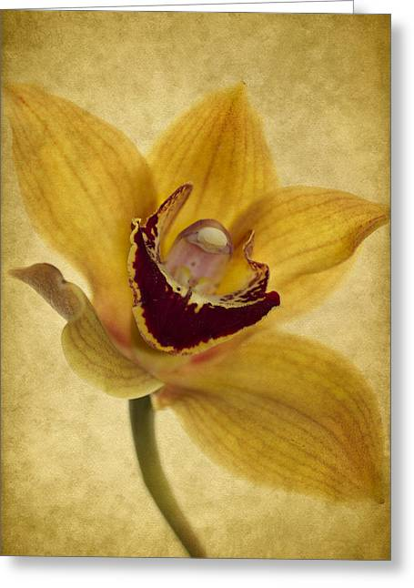 Orchid Greeting Cards - Singular Sensation Greeting Card by Rebecca Cozart