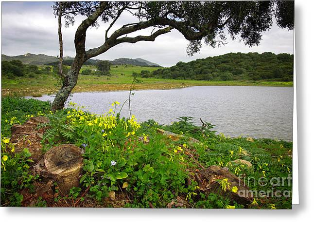 Flowery Greeting Cards - Sintra Landscape Greeting Card by Carlos Caetano