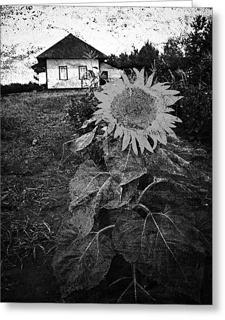 Photographs Photographs Greeting Cards - Sips Of Soil  Greeting Card by Jerry Cordeiro