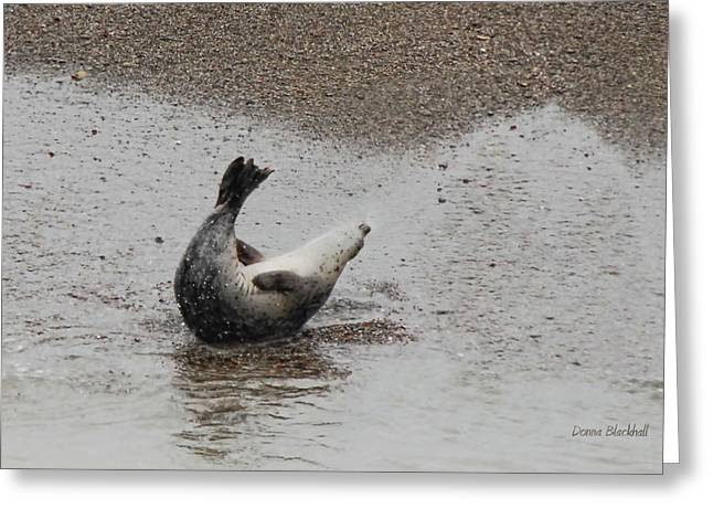 Recently Sold -  - California Sea Lions Greeting Cards - Sit Ups Greeting Card by Donna Blackhall