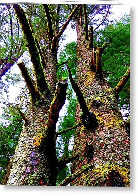 Sitka Greeting Cards - Sitka Trees 3 Greeting Card by Randall Weidner