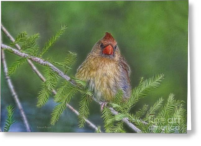 Cedar Tree Greeting Cards - Sitting In The Cedar Greeting Card by Deborah Benoit