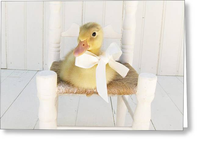 Sitting Pretty Greeting Card by Amy Tyler