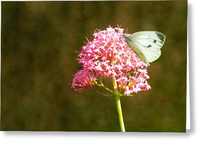 Pink Flower Prints Greeting Cards - Sitting pretty Greeting Card by Sharon Lisa Clarke
