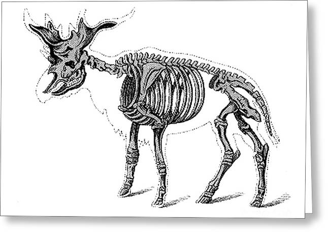 Pre-restoration Greeting Cards - Sivatherium, Cenozoic Mammal Greeting Card by Science Source