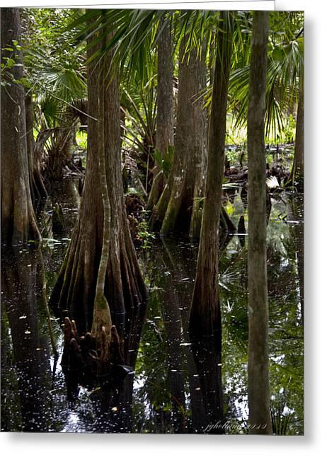 Florida Swamp Reflection Greeting Cards - Six Mile Cypress Swamp Florida Greeting Card by Joseph G Holland