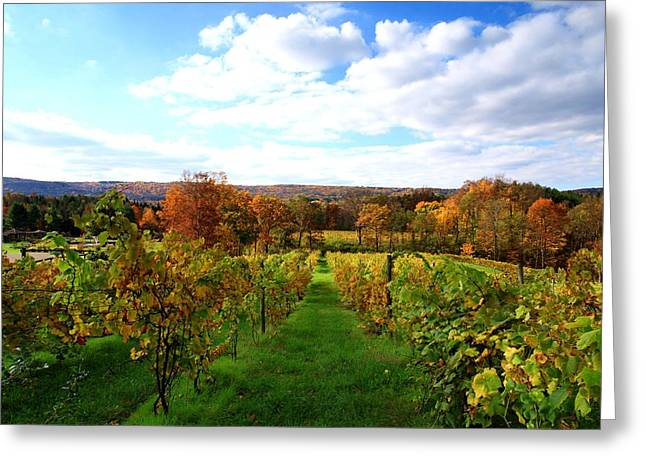 Blue Grapes Greeting Cards - Six Miles Creek Vineyard Greeting Card by Paul Ge