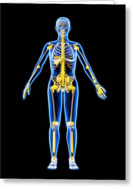 Dexterity Greeting Cards - Skeleton And Ligaments, Artwork Greeting Card by Roger Harris