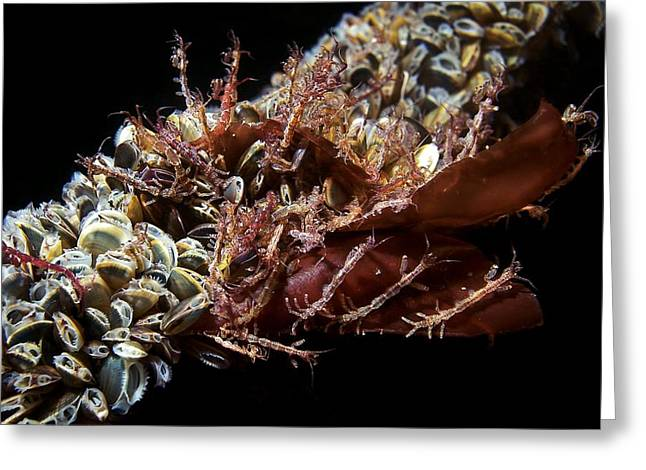 Skeleton Shrimp And Mussels Greeting Card by Alexander Semenov