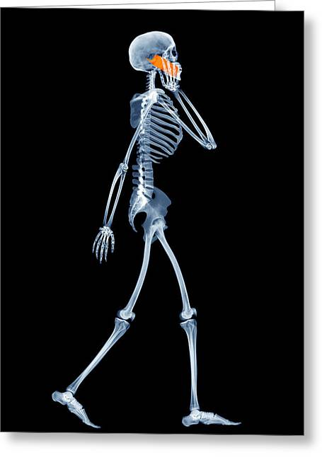 Mobile Phone Greeting Cards - Skeleton Using A Mobile Phone Greeting Card by D. Roberts