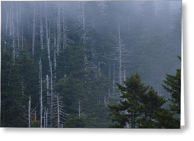 Great Smokey Mountains Greeting Cards - Skeletons in the Mist Greeting Card by Ryan Heffron