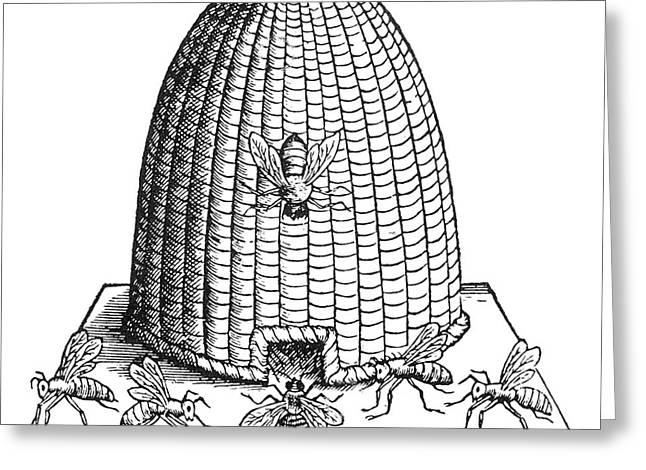 Beekeepers Greeting Cards - Skep Beehive, 17th Century Greeting Card by Science Source